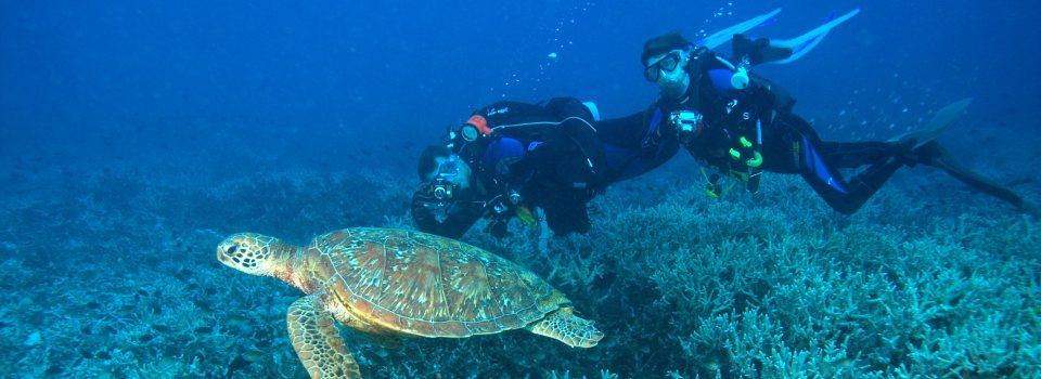 Recreational Diving