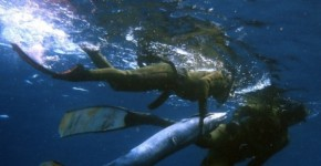 Australian Underwater Federation Spearfishing